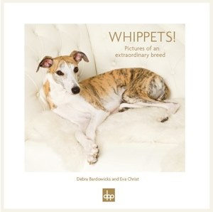 Whippets! Pictures of an extraordinary Breed