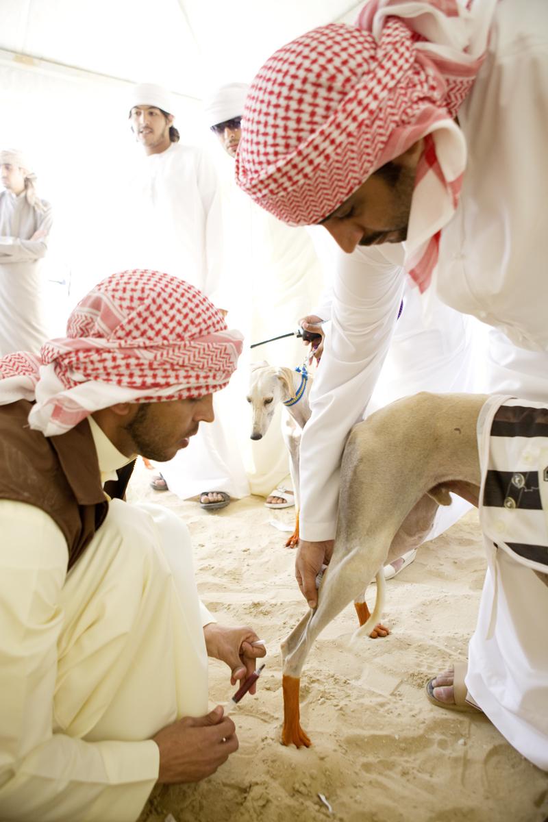 DOG_abu_dhabi_163