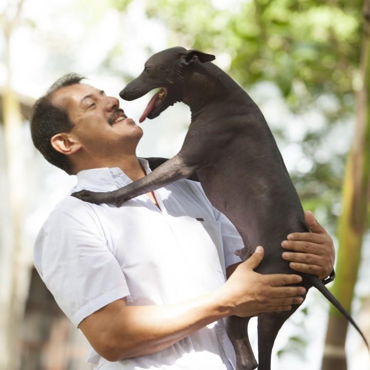 Xoloitzcuintle - Mexikanischer Nackthund