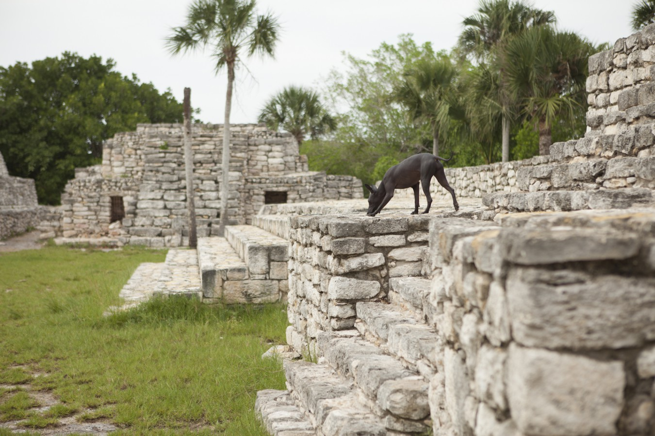 Xolos Mexiko