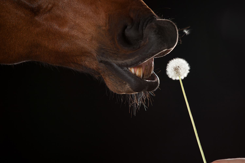 horse_studio_1