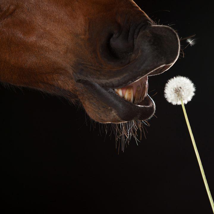 Equine studio photography