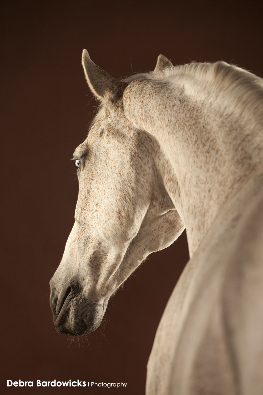 horse_studio